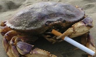 full-crab-sour-cream-album-cover